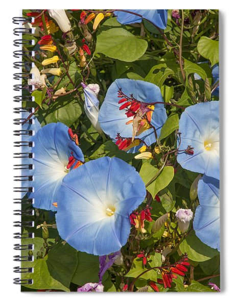 Bhubing Palace Gardens Morning Glory Dthcm0433 Spiral Notebook