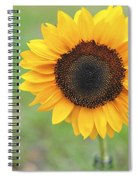 Big Bright Yellow Colorful Sunflower Art Print Spiral Notebook