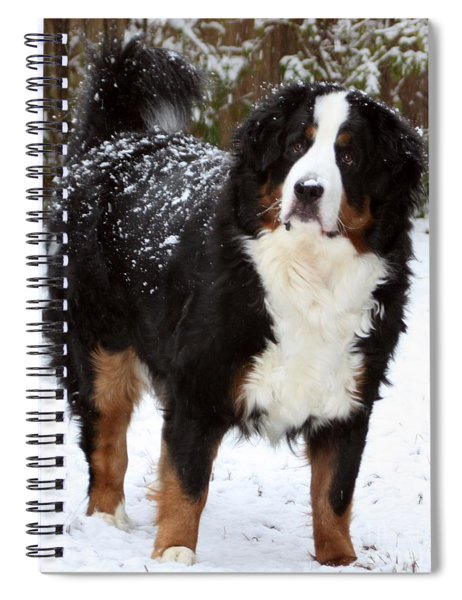 Spiral Notebook featuring the photograph Snow Happy by Patti Whitten