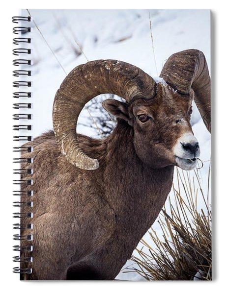 Bighorn Ram Spiral Notebook