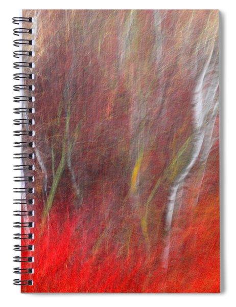 Birch Trees Abstract Spiral Notebook