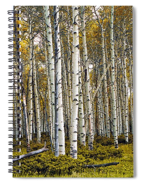 Aspen Trees In Autumn Spiral Notebook