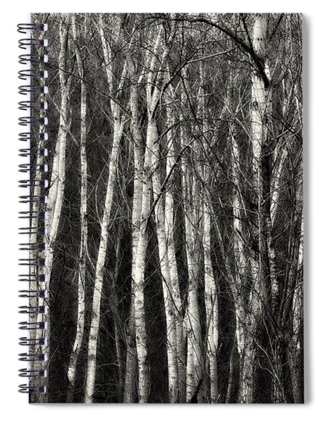 Birches Spiral Notebook