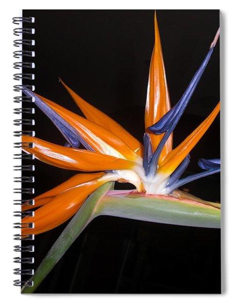 Bird Of Paradise Beauty 4 Spiral Notebook