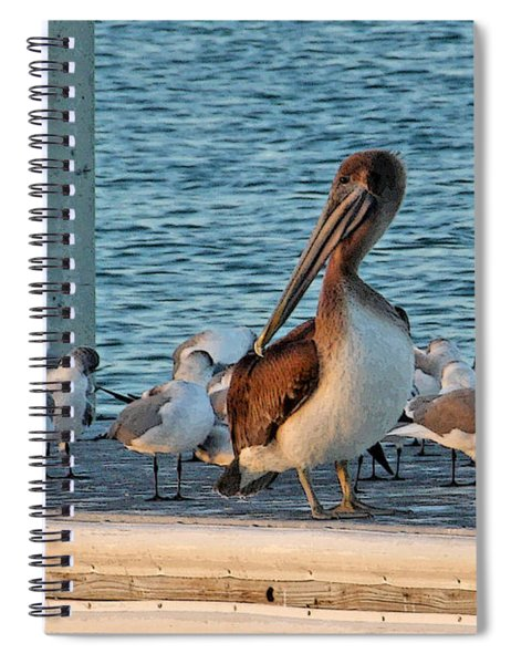 Birds - Among Friends Spiral Notebook