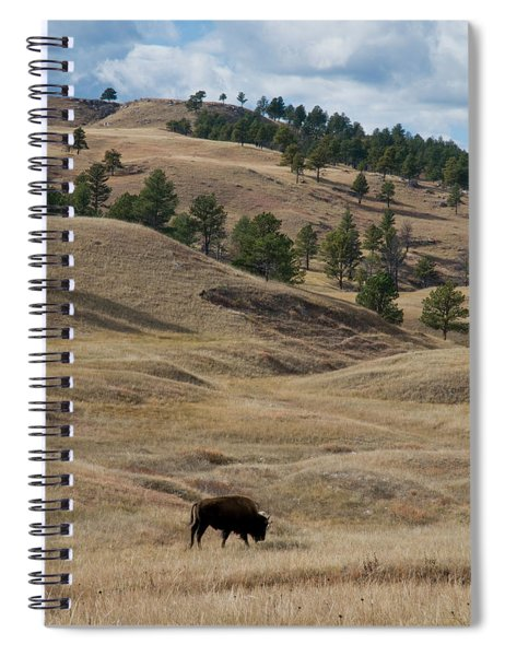 Bison Grazing Custer State Park South Spiral Notebook