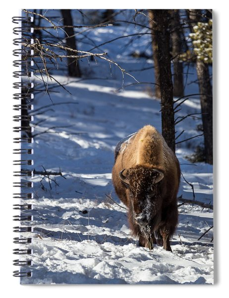 Bison In Winter Spiral Notebook