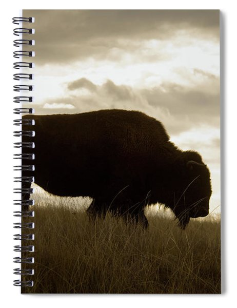 Bison Wlking In Grasslands Spiral Notebook