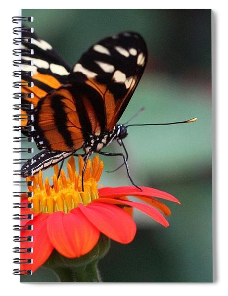 Black And Brown Butterfly On A Red Flower Spiral Notebook