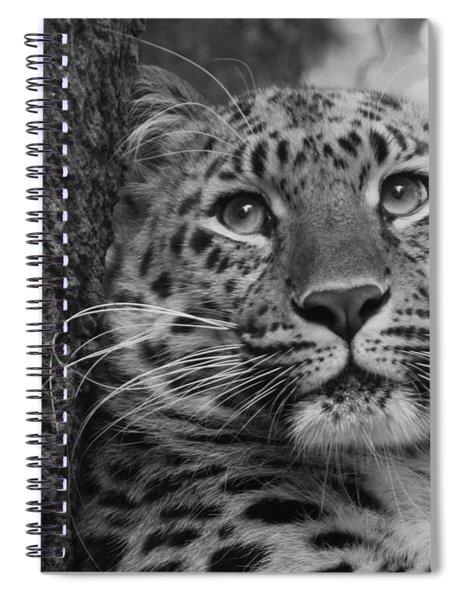 Black And White Amur Leopard Spiral Notebook