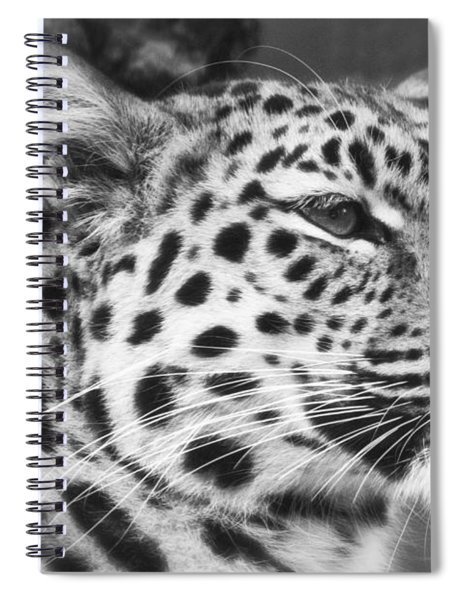 Black And White - Amur Leopard Portrait Spiral Notebook