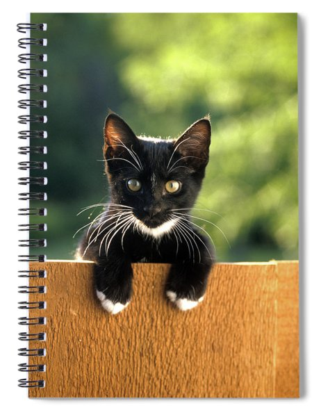 Black And White Kitten Peering Over Top Spiral Notebook