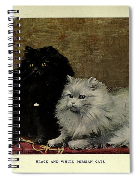 Black And White Persian Cats Spiral Notebook