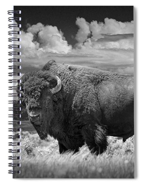 Black And White Photograph Of An American Buffalo Spiral Notebook