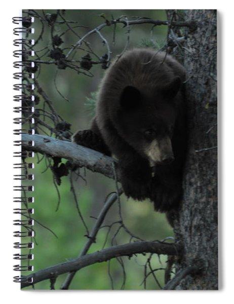 Black Bear Cub In Tree Spiral Notebook