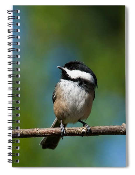 Black Capped Chickadee Perched On A Branch Spiral Notebook