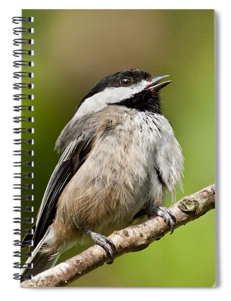 Black Capped Chickadee Singing Spiral Notebook