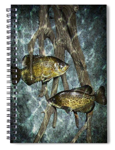Black Crappies A Fish Image No 0143 Blue Version Spiral Notebook