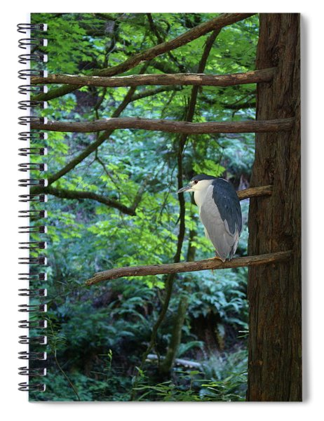 Black-crowned Night Heron Spiral Notebook