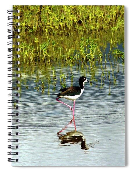 Black-necked Stilt IIi Spiral Notebook
