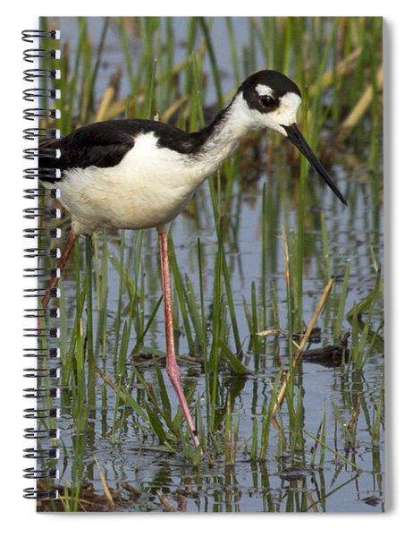 Black-necked Stilt Spiral Notebook