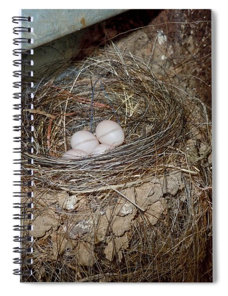 Black Phoebe Nest With Eggs Spiral Notebook