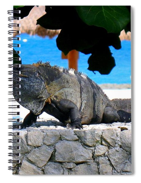Spiral Notebook featuring the photograph Black Spiny Tailed Iguana by Patti Whitten