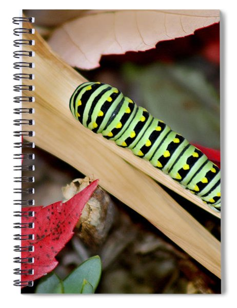 Black Swallowtail Butterfly Caterpillar Spiral Notebook