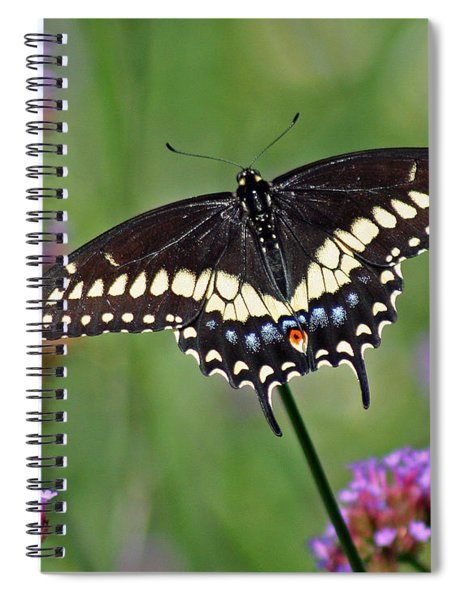 Black Swallowtail Butterfly  Spiral Notebook