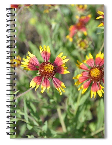 Blanketflower Spiral Notebook
