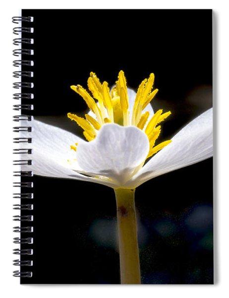 Bloodroot 1 Spiral Notebook