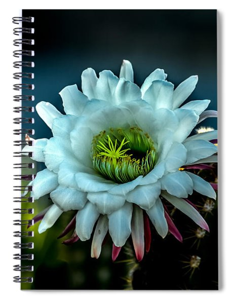 Blooming Argentine Giant Spiral Notebook