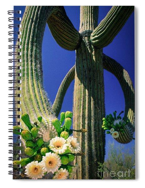 Blooming Saguaro Spiral Notebook