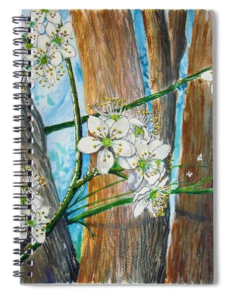 Blooms Of The Cleaveland Pear Spiral Notebook