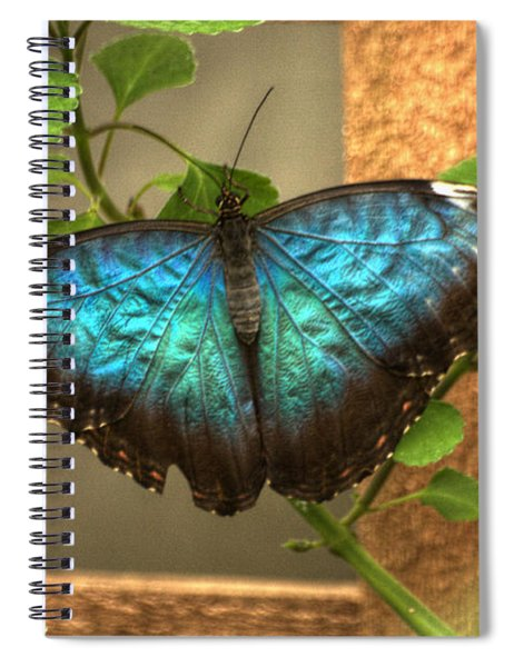 Blue And Black Butterfly Spiral Notebook