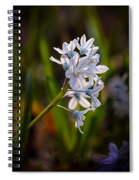 Blue And White Spiral Notebook
