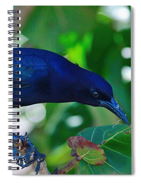 Blue-black Black Bird Spiral Notebook