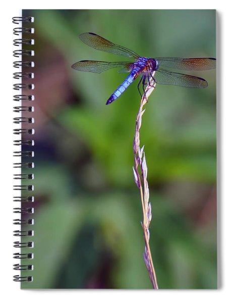Blue Dragonfly On A Blade Of Grass  Spiral Notebook
