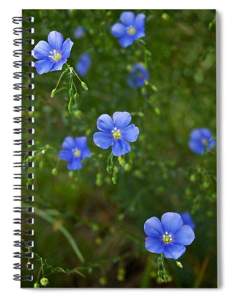 Blue Flax Spiral Notebook