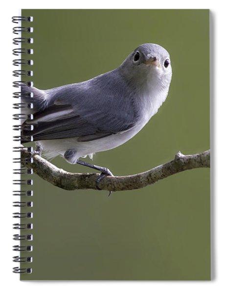 Blue-gray Gnatcatcher Spiral Notebook