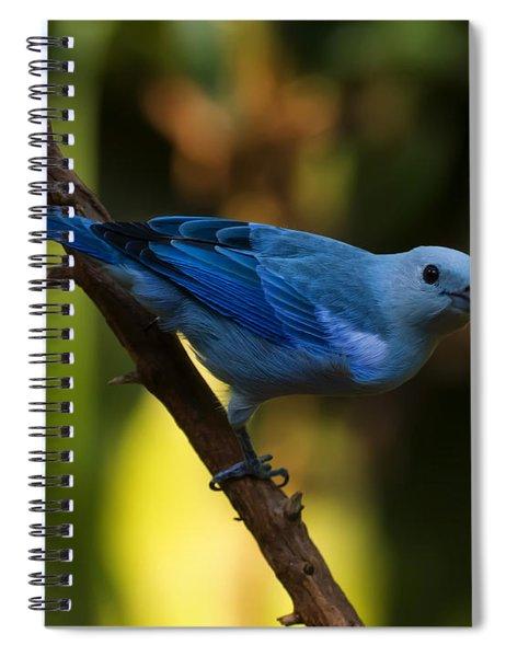 Blue Grey Tanager Spiral Notebook