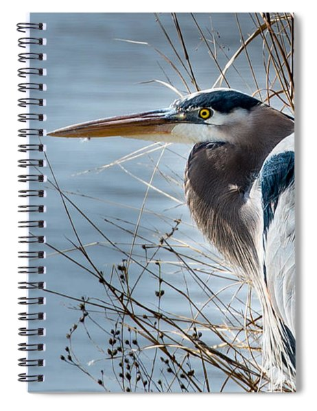 Blue Heron At Pond Spiral Notebook