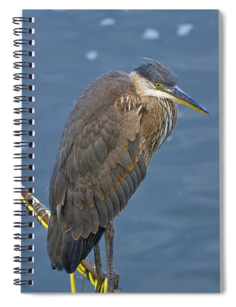 Spiral Notebook featuring the photograph Blue Herron by Jim Thompson