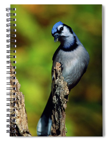 Blue Jay Bird On Perch Spiral Notebook