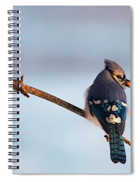 Blue Jay With Nuts Spiral Notebook