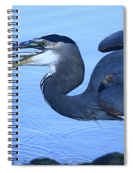 Blue Heron Gulp Spiral Notebook