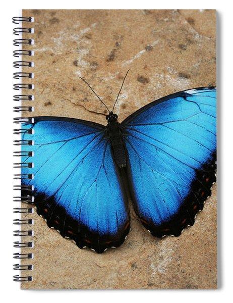 Blue Morpho #2 Spiral Notebook