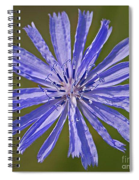 Blue Star... Spiral Notebook