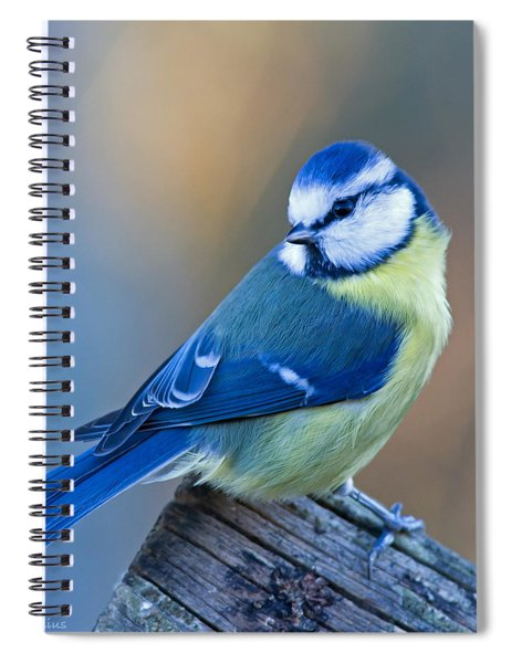 Blue Tit Looking Behind Spiral Notebook