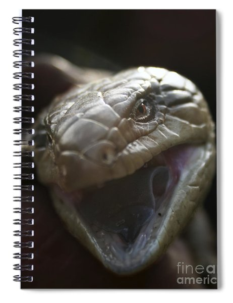 Blue Tongue Lizard Spiral Notebook